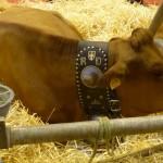Gout-saveur- tradition-essonne-salon-Agriculture D