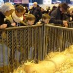 Gout-saveur- tradition-essonne-salon-Agriculture E