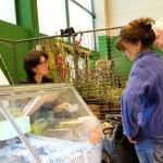 salon-saveur-gourmandises-cerny-essonne-saveursjardin